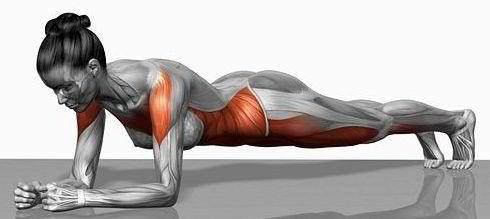 kilos-superflus-muscle_planche-abdominale